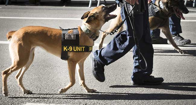 Washington State Hospital Employs Security Dog to Curb Violence